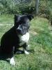 Chaily - éleveur canin Dogzer