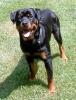 lolo89 - éleveur canin Dogzer