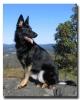 gabrielle4 - éleveur canin Dogzer