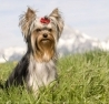 sylvie-guerin - éleveur canin Dogzer