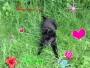 blafleur - éleveur canin Dogzer