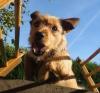 ficelle41 - éleveur canin Dogzer