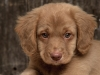 FanClubDesLabradors - éleveur canin Dogzer