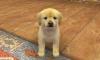 Hera222 - éleveur canin Dogzer
