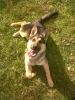 Samy-- - éleveur canin Dogzer