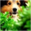 Seichy - éleveur canin Dogzer