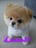 lisette34 - éleveur canin Dogzer
