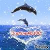 Justine46300 - éleveur canin Dogzer