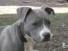Miss-wouaf - éleveur canin Dogzer