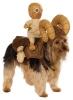 juju402 - éleveur canin Dogzer