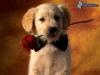 Jessi234 - éleveur canin Dogzer