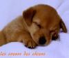Engel03 - éleveur canin Dogzer