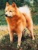 sawiz - éleveur canin Dogzer