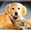 chien9595 - éleveur canin Dogzer