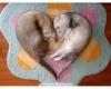 coeur4848 - éleveur canin Dogzer
