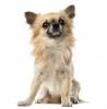 Guescha - éleveur canin Dogzer