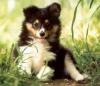 Lapinacam - éleveur canin Dogzer