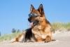 ViviPro54 - éleveur canin Dogzer