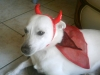 nekomiaoulol - éleveur canin Dogzer