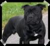 eileen591994 - éleveur canin Dogzer