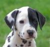abcde32 - éleveur canin Dogzer