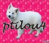 ptilou4 - éleveur canin Dogzer