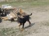 Mad15 - éleveur canin Dogzer