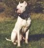 2005-2009 - éleveur canin Dogzer