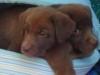 melanie09082000 - éleveur canin Dogzer