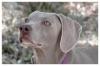reza2001 - éleveur canin Dogzer