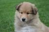 wolza - éleveur canin Dogzer