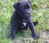 solyaneamezcua - éleveur canin Dogzer