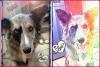 emirine33 - éleveur canin Dogzer