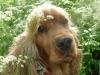 lilou3357 - éleveur canin Dogzer