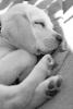 chien087 - éleveur canin Dogzer