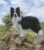 mathilda2 - éleveur canin Dogzer