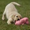 math154 - éleveur canin Dogzer