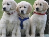 rejeanne99 - éleveur canin Dogzer