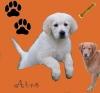 Arno - éleveur canin Dogzer