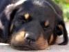 Meryl83720 - éleveur canin Dogzer