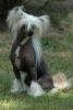 Hourcha2 - éleveur canin Dogzer