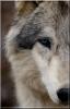 Plume-Rousse - éleveur canin Dogzer