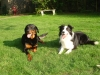 m.Hayden - éleveur canin Dogzer