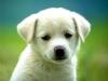 Millie13400 - éleveur canin Dogzer