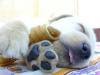 cypcyp2002 - éleveur canin Dogzer