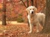 TheSwaggDog - éleveur canin Dogzer