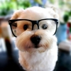 babygirl512roxy - éleveur canin Dogzer