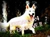 jordandu24 - éleveur canin Dogzer