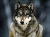 cucciolabirba2 - éleveur canin Dogzer