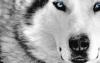 mopalie - éleveur canin Dogzer